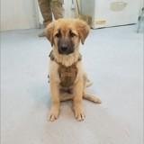Ces soldats ont fait rapatrier un chien errant qu'ils ont rencontré en mission en Afghanistan