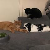 Ces chats sont totalement fans de leur frère lapin et c'est vraiment trop mignon