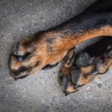 Les chroniques de Maître Terrin : Justice pour Warrior, la chienne dont le corps a été retrouvé carbonisé