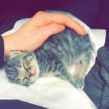 Trouvée dans une boite, cette minuscule chatte s'est métamorphosée (Photos)