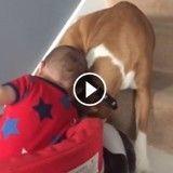 Ce bébé et ce chien vont vous faire totalement craquer (Vidéo du jour)