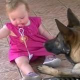 Le bébé est assis à côté du Berger allemand, attrape soudain une pierre et ... (vidéo)