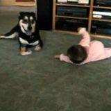 Un chien imite un bébé (Vidéo du jour)