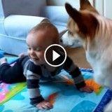L'amitié entre ce bébé et son corgi va vous réchauffer le cœur (Vidéo du jour)