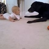 Ce que ce bébé va faire pour rejoindre son chien est adorable !  (Vidéo du jour)