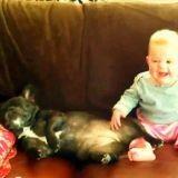 Le bébé qui se moque du chien qui ronfle (Vidéo du jour)