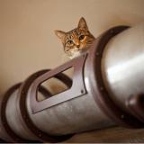 Cette installation va faire rêver tous les propriétaires de chats !