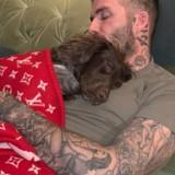 Victoria Beckham poste une photo de David Beckham et de leur chien pendant la sieste