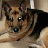 Ce chien sera-t-il euthanasié pour être enterré avec sa maîtresse ?