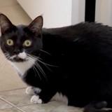 Cette chatte a sauvé sa famille d'une mort certaine