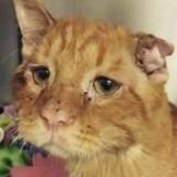 Ce chat allait être euthanasié : quelques heures avant, le vétérinaire doit tout arrêter !