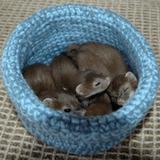 Les bénévoles d'une association tricotent des «nids» pour recueillir les animaux blessés