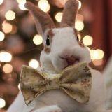Faites connaissance avec Benji Bun, le lapin le plus élégant d'Instagram