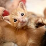 Né sans paupières, ce chaton qui ne pouvait pas grandir a déjoué tous les pronostics