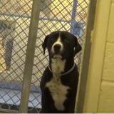 La touchante réaction de ce chien qui quitte la fourrière vaut tout l'or du monde ! (Vidéo du jour)