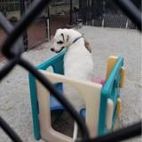 """Ce chien a eu droit à sa propre parodie de """"The Office"""" pour être adopté"""