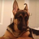 Il chante sous la douche, la réaction de son chien est incroyable (Vidéo)