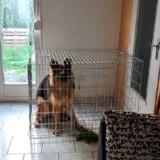 Mineure, elle achète un chiot chez un éleveur et l'enferme dans une cage : la raison donne des frissons