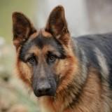 United Airlines confond deux chiens et les envoie à des milliers de kilomètres de leur famille