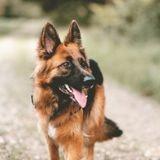 Elle fonce pour sauver son chien qui a avalé une balle : un ouvrier arrive et fait l'impensable !