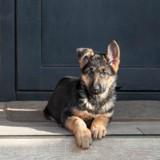 Un chien accusé d'être raciste pour une raison à peine croyable
