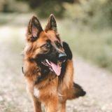 Poitiers : il laisse son chien mourir de chaud dans sa véranda pendant la canicule