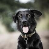 Qui est le chien le plus abandonné de France ?