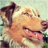 La domestication du chien a été néfaste pour sa santé