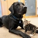 Elle ramène une portée de 7 chatons chez elle : son énorme chien a une réaction qui la prend de court