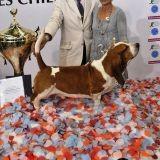 Qui est le plus beau chien de France 2010 ?