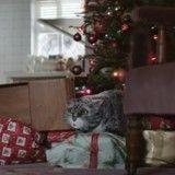 Les bêtises involontaires d'un chat rappellent ce qu'est la véritable magie de Noël (Vidéo du jour)