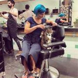 Ce chat travaille dans un salon de coiffure depuis 4 ans et a un job très important