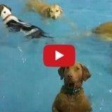 Beya, la chienne qui ne nage pas, a fait rire le monde entier en une semaine
