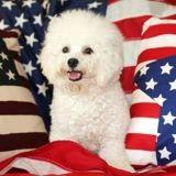 Primaires présidentielles aux USA : les candidats misent sur leurs chiens pour rallier des votes