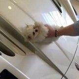 Un fils à papa filmé en train de polir sa voiture de luxe avec un chiot