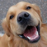 Bien-être animal : quelle est la place des vétérinaires et leurs attentes ?