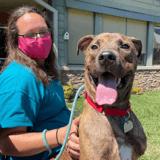 Après 260 jours au refuge, des bénévoles font une surprise à un chien adopté