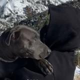Billie Eilish remarque que son chiot va mal : ce que le vétérinaire découvre est un choc