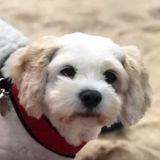 Son chien mange du cannabis par erreur, elle publie une vidéo pour alerter les propriétaires d'animaux (Vidéo)