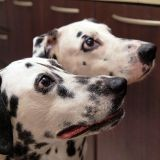 Cuisiner ses propres biscuits pour chiens