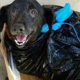 Atteinte d'un cancer, cette chienne a été abandonnée… dans un sac poubelle !