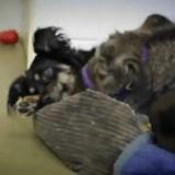 Blakely, le chien qui veille sur des animaux orphelins