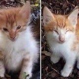 Elle trouve deux chatons aveugles qui sont là l'un pour l'autre quoi qu'il arrive, un an plus tard…