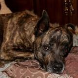Atteinte d'un cancer très rare, cette chienne va avoir droit à une opération de la dernière chance grâce à une prothèse imprimée en 3D