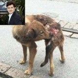 En plein tournage en Chine, Orlando Bloom sauve une chienne blessée