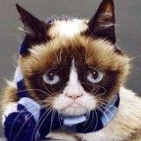 Blue Monday :  10 chats et chiens déprimés qui ont besoin d'un câlin de toute urgence !