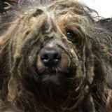 Après avoir vécu 5 ans enfermé dans une cave, ce chien ne ressemble même plus à un chien