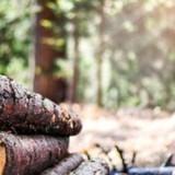 Une femme entend aboyer dans les bois, quand elle se rapproche elle est dévastée