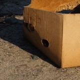 Boite en carton abandonnée dans la rue : les policiers entrent dans une colère noire en l'ouvrant