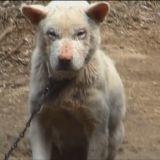 Alyssa Milano vient en aide à une chienne destinée à l'abattoir